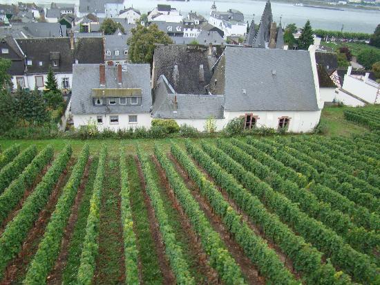 Hotel Jagdschloss Niederwald: View above vineyards