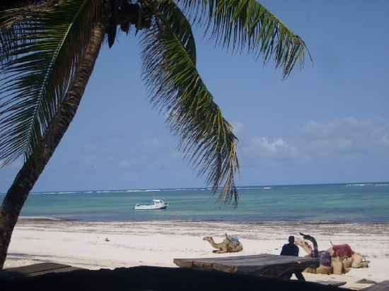 Diani Marine Divers Village: The beach with dive boat in background.