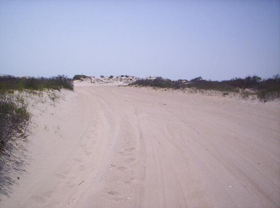 My buddy at home picture of assateague island national for Cabins near assateague island