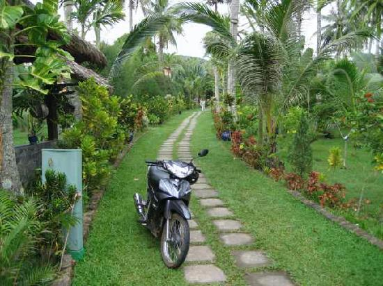 Cassia Cottage: A pathway that leads to the road