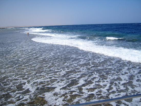 Resta Reef Resort: Récif