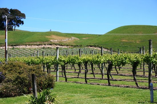 Te Mata Estate Winery & Vineyards