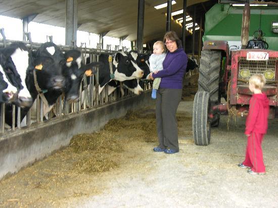 De Bergvallei: the cattle