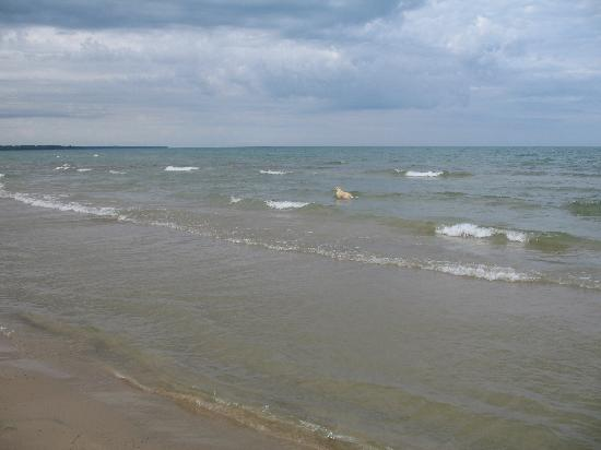 Sauble Beach, Canadá: Dogs can use the beach in designated areas only