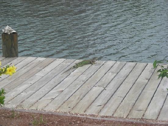 Three Iguanas Villa 사진