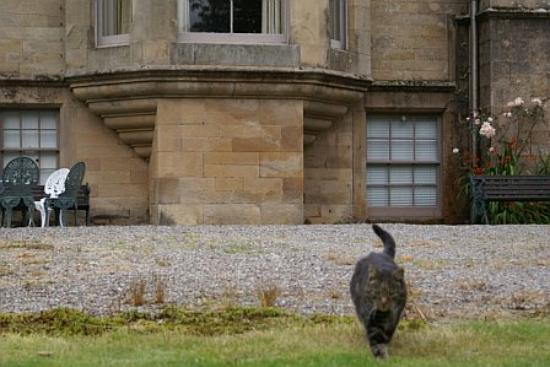 Stronvar House: The Stronvar Cat