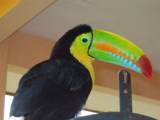Villa Marita: The owner's toucan - quite entertaining