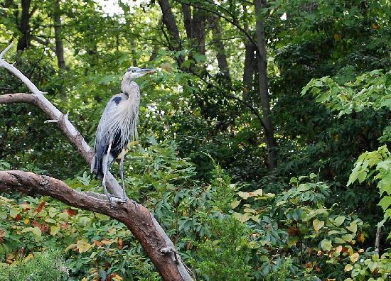 Quiet Waters Park: Heron on Harness Creek- Quiet Waters