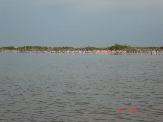 Hotel Reef Yucatan - All Inclusive & Convention Center: Flamingos