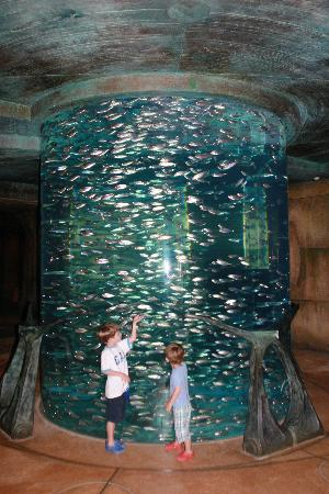 Atlantis, The Palm: Fish in Lost Chambers