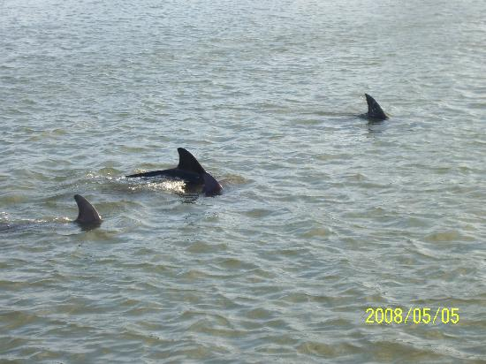 Anglers Cove : Dolphins seen on evening boat cruise