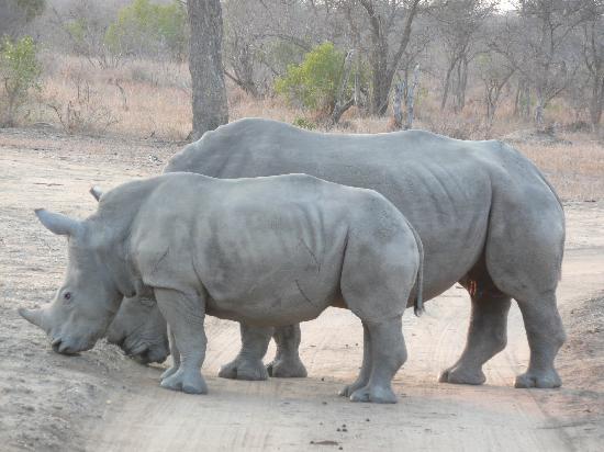 Thornybush Private Game Reserve, Sudáfrica: On ne passe pas!