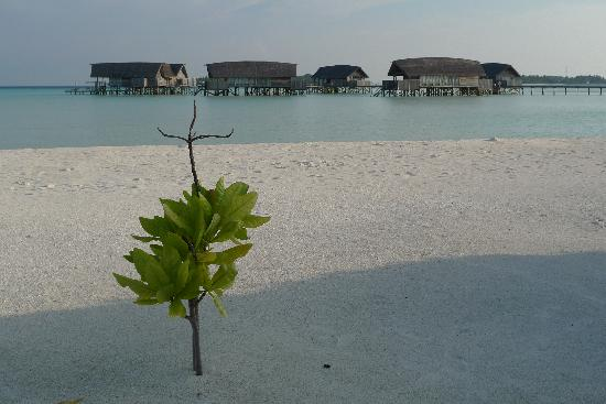 COMO Cocoa Island: new life