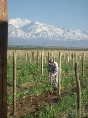 Tupungato, Argentinië: View from picture window, Mendoza vineyard