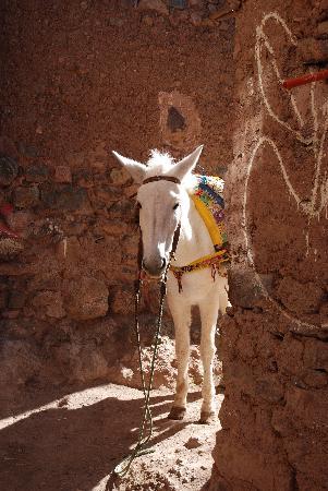 Douar Samra : Mule