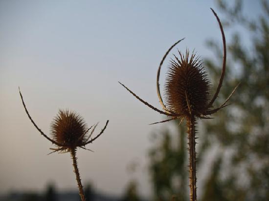Agriturismo  Pieve Sprenna: nature