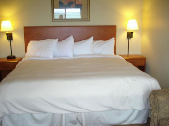 AmericInn Lodge & Suites Thief River Falls: really great bed very comfortable