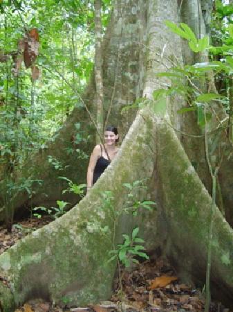 Drake Bay, คอสตาริกา: corcovado trail - ficus tree