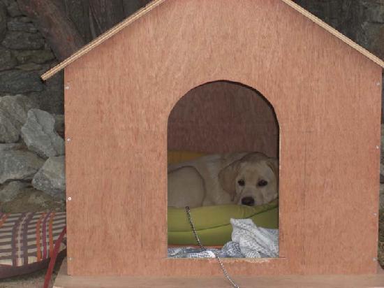 Vencia Hotel: Neri, the labrador pup.