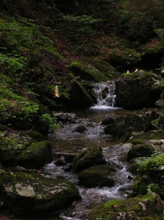 Canton of Glarus, Suiza: Bach und bemooste Steine am Obersee