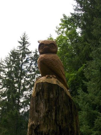 Canton of Glarus, Suiza: Klatsch in die Hände - die Eule fliegt nicht weg