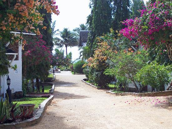 Pinewood Beach Resort & Spa: Resort lane
