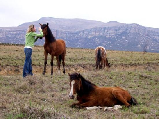Wild Horses Lodge: myself with the gentle, loving, wild horses