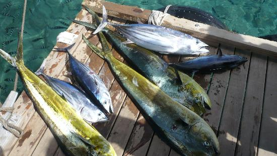 Jean-Michel Cousteau Resort Fiji: fishing haul