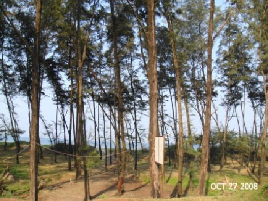 Saagar Beach Resort : View of the Beach from the Resort