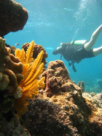 Reef Experience: Diving the Great Barrier Reef