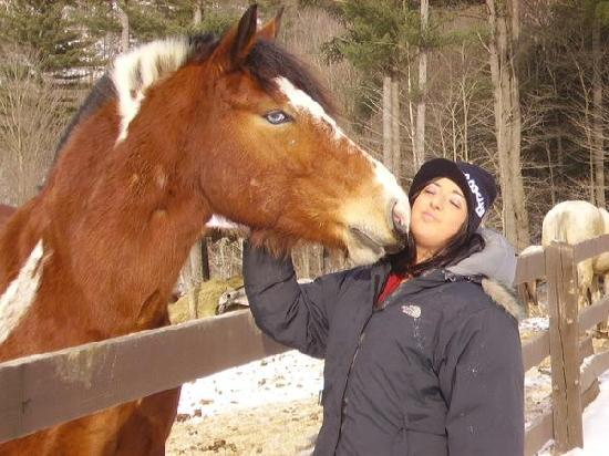 Ridin-Hy Ranch Resort: The beautiful horses you ride