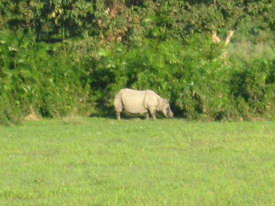 Kaziranga National Park, India: Rhino