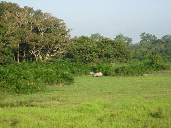 Kaziranga National Park, India: Jungle