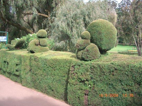 Ooty (Udhagamandalam), India: Botanical Garden