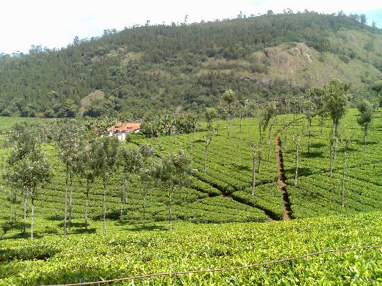 nabard report on nilgiris tea The national bank for agriculture and rural development (nabard) is offering schemes for the small tea growers this is the first time that nabard has come forward to help the tea growers.