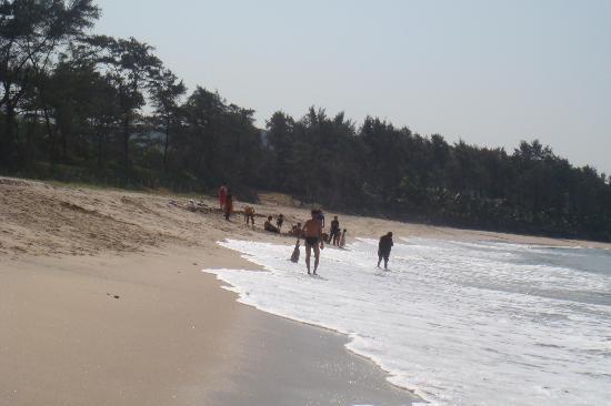 Prakruti Resort Their Private Beach With Buffalo Cart Transport Tooo Coool