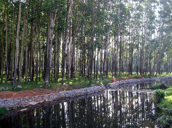 Munnar, India: Into the woods