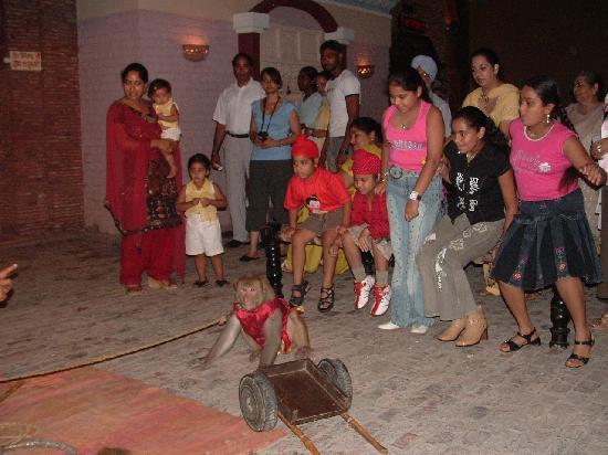 Rangla Punjab Haveli: MONKEY SHOW