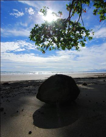 Shaka Beach Retreat: Shaka's back yard