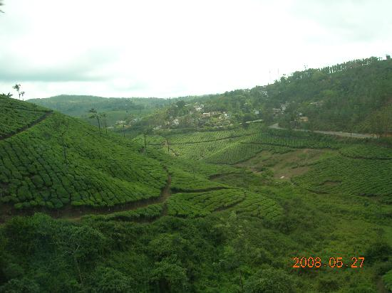 Tea Gardens (On the way to Thekkady)