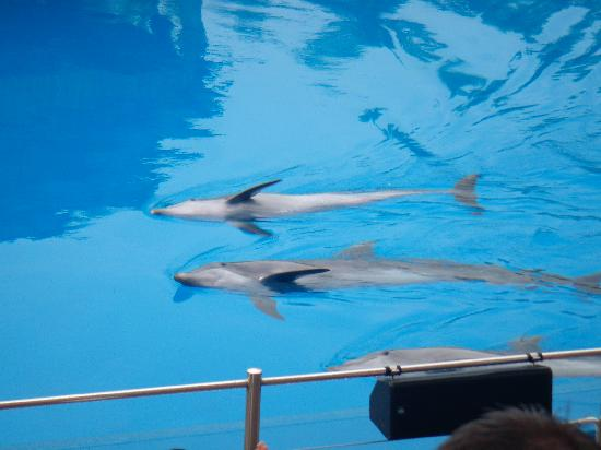Durban, South Africa: The Dolphin Show!