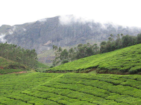 Munnar, Indien: The drive to