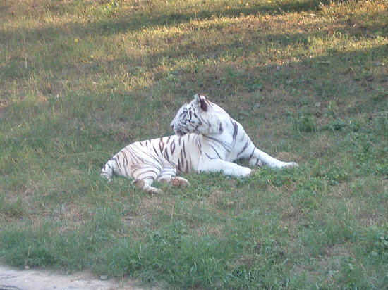 National Zoological Park of Delhi