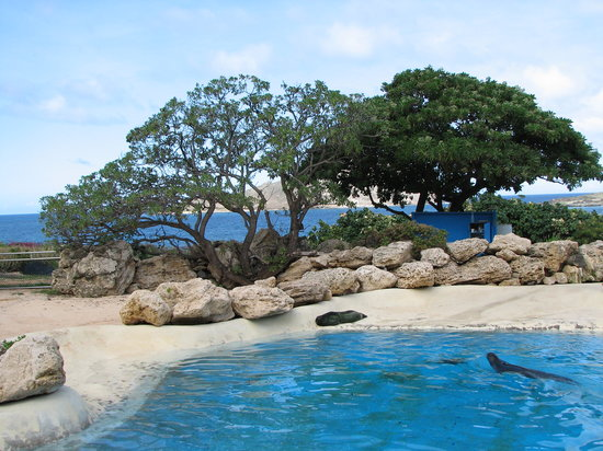 Waimanalo, Hawaï : Sea Lions lounging in their enclosure