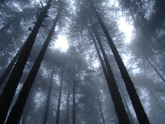 Club Mahindra Kanatal: Kanatal: Trees, Mist & Mysterious