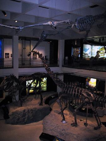 The Houston Museum of Natural Science: Main dinosaur exhibit at Houston Museum of Natural Science