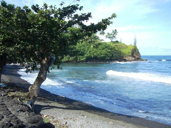 Orchid Tree Bed and Breakfast: black sand beach