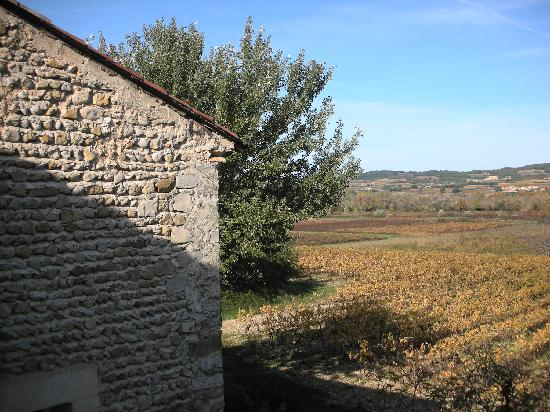 L'Ecole Buissonniere Provence : vue sur les vignes