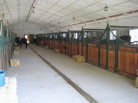 Hacienda El Boyal - Landhotel & Reitzentrum: Stalls