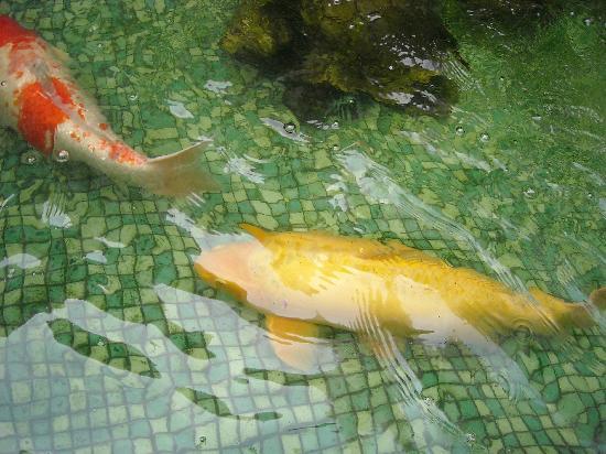 PJ Watergate Hotel: Huge Koi in PJ's Fish Pond
